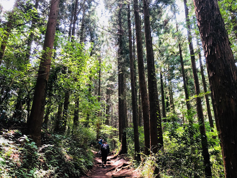 tral of mt. takao