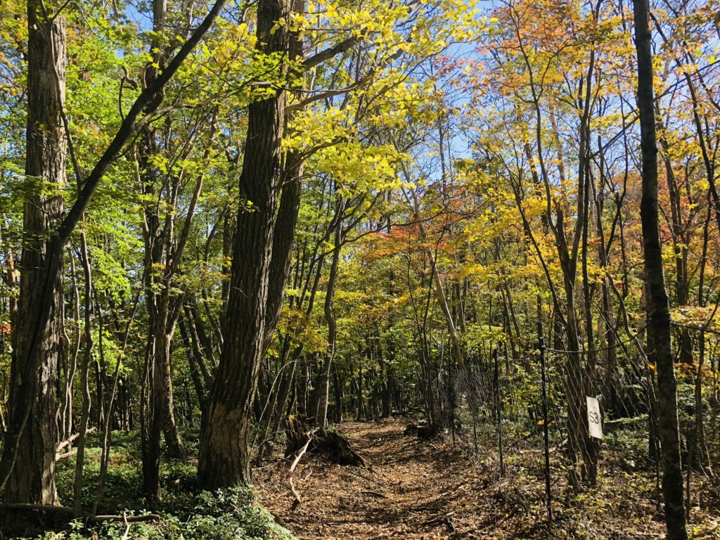 """Tomin-no-mori"" is the trailhead of Mt. Mitou popular with hikers. Hiking routes are stretched all around in this area, but let's proceed to ""Kaze-hari-touge 風張峠"" in this area."