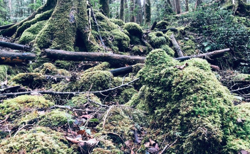 Private Trail Running Guide to Aokigahara | Explore the Sea of Trees!