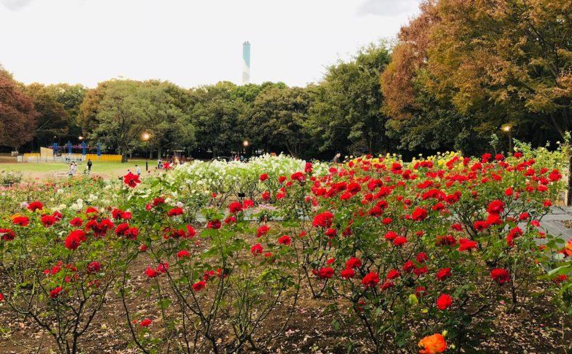 砧公園 | 足に心地よい土のトレイルランニングコース