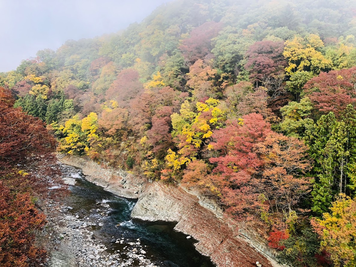 Sasago River | If the season is autumn you can enjoy beautiful Japanese autumn leaves.