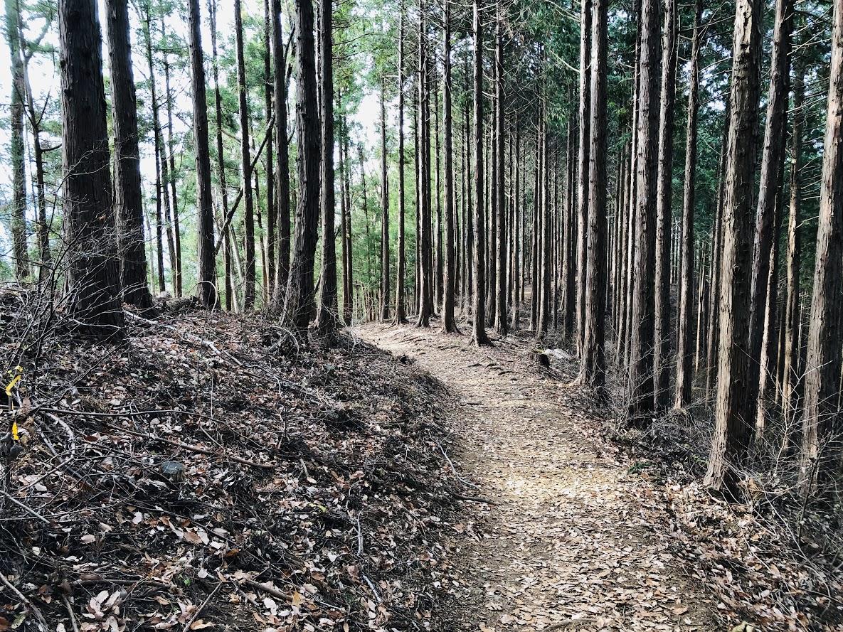 美しい杉林が続く